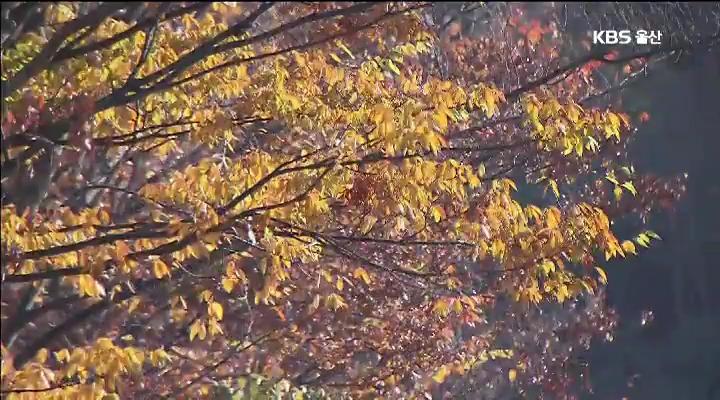 '낙엽 산책길' 인기