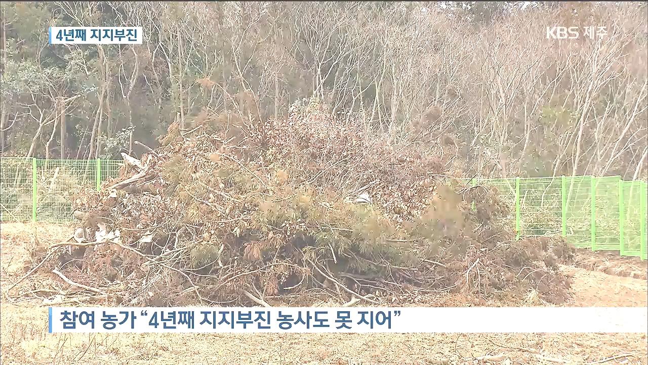 <태양광기획>감귤원 태양광...4년째 지지부진