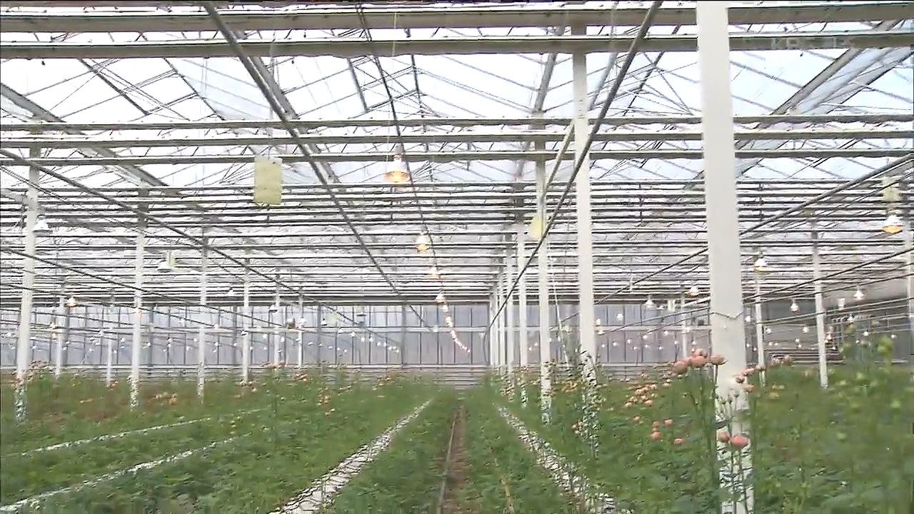 원예농가, 인공조명으로 미세먼지 극복