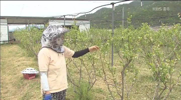 [귀농귀촌이 희망이다③] 화합하며 성장하는 마을기업