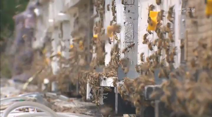 사라진 꿀벌... 지역 양봉 농가 울상