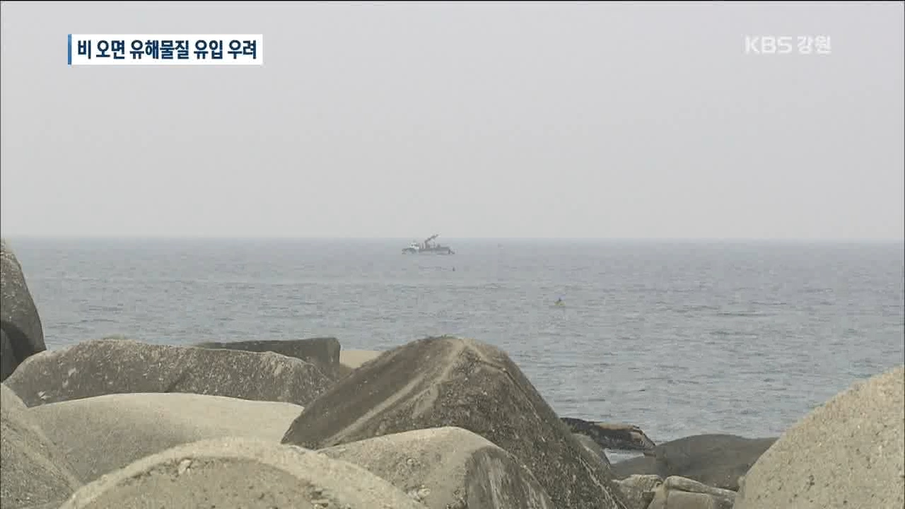 산불 후폭풍 '해양생태계 황폐화' 비상