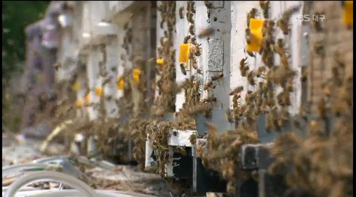 꿀벌 실종, 양봉농가 울상